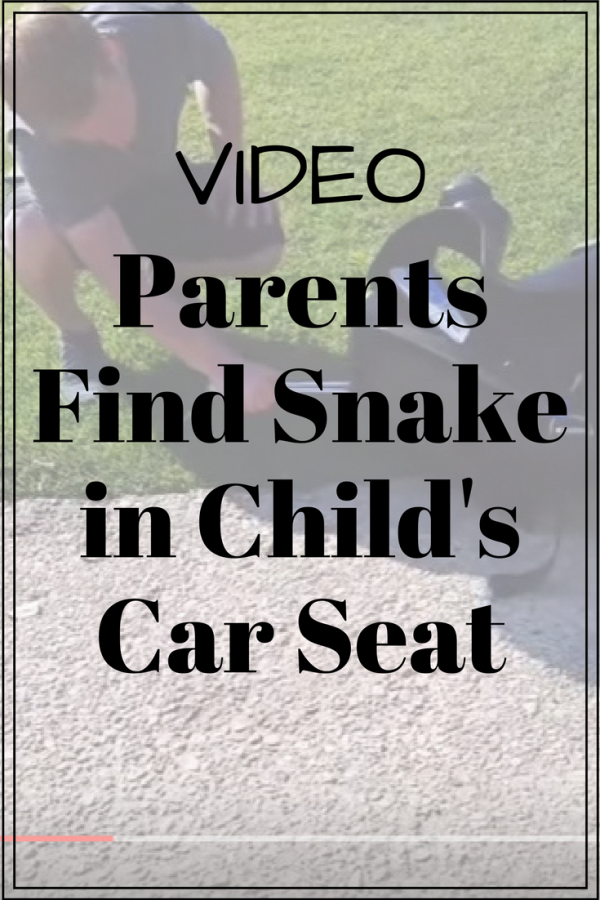 Parents find snake in child's car seat